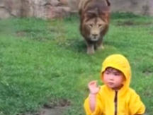 Niño posaba frente a un león, la reacción del animal generó un impactante incidente (VÍDEO)
