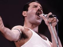 Pequeño animal imita a Freddie Mercury y causa furor en redes sociales [VIDEO]