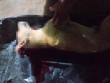Video de perro asesinado de un machetazo causa indignación en Facebook