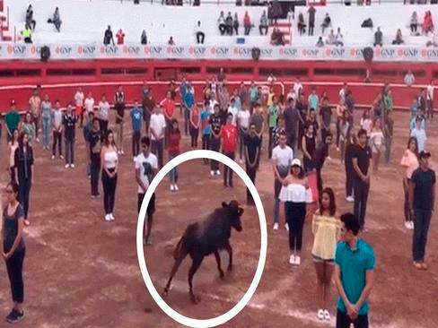 "Toro ""salvaje"" es liberado en multitud y experimento desterró mitos [VIDEO]"